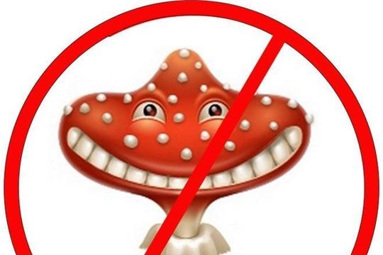 Осторожно, ядовитые грибы!