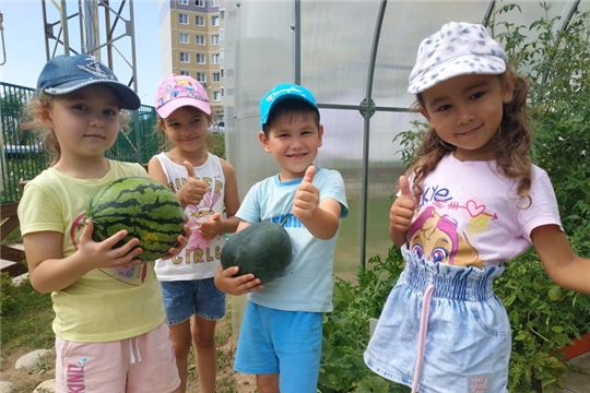 Осень встречай – урожай собирай, дошкольники участвуют в реализации природоохранного социально-образовательного проект «Эколята-дошколята»