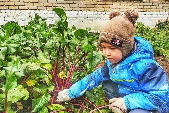 Наблюдение за ростом овощей.
