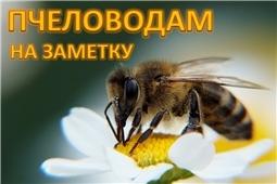 Это должен знать каждый пчеловод