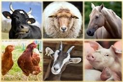 Реализация мероприятий по предупреждению и ликвидации заразных и иных болезней животных, в том числе сельскохозяйственных, домашних, зоопарковых и других животных, пушных зверей, птиц, рыб, пчел, и осуществление планов ветеринарного обслуживания животноводства