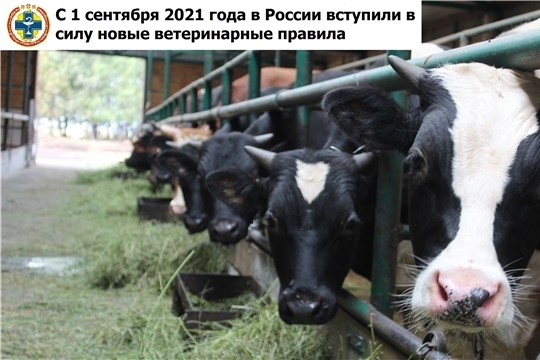 С 1 сентября 2021 года в России вступили в силу новые ветеринарные правила