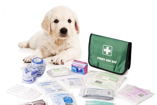 Новые правила для ветеринарных аптек