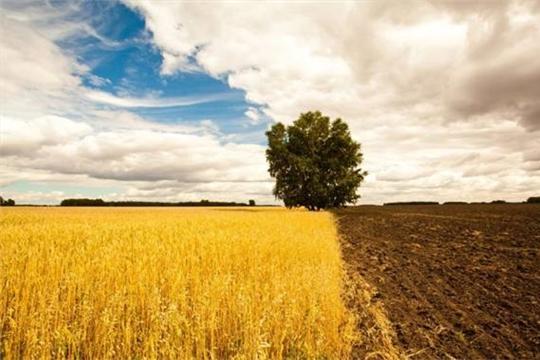 Производительность почвы необходимо поддерживать