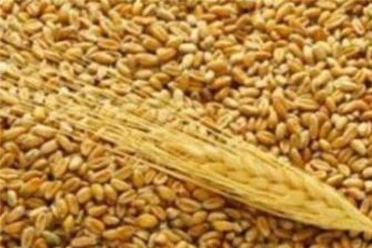 Управлением Россельхознадзора по Чувашской Республике и Ульяновской области выявлены  факты недостоверного декларирования партий зерна и продуктов его переработки