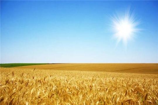 В Ульяновской области с начала 2020 года в Республику Азербайджан отгружено 12,3 тыс. тонн пшеницы продовольственной