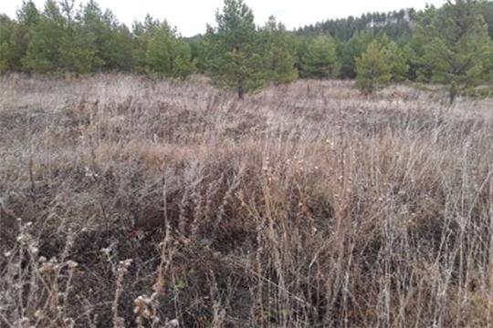 Проведено рейдовое обследование земельного участка в Тереньгульском районе Ульяновской области
