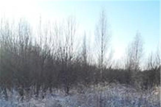 По итогам внеплановых проверок на территории Юнгинского сельского поселения Моргаушского района Чувашской Республики возбуждены административные дела
